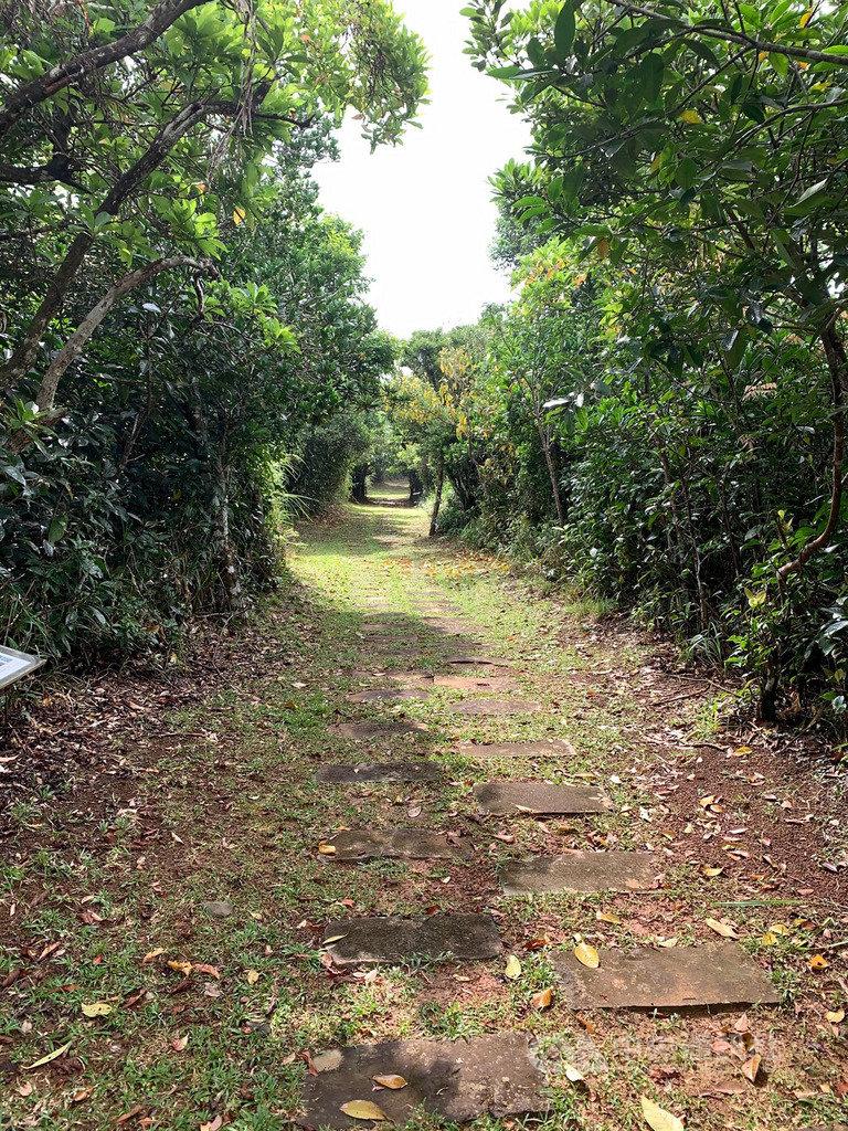 綠島過山古道尋寶 觀察動植物生態