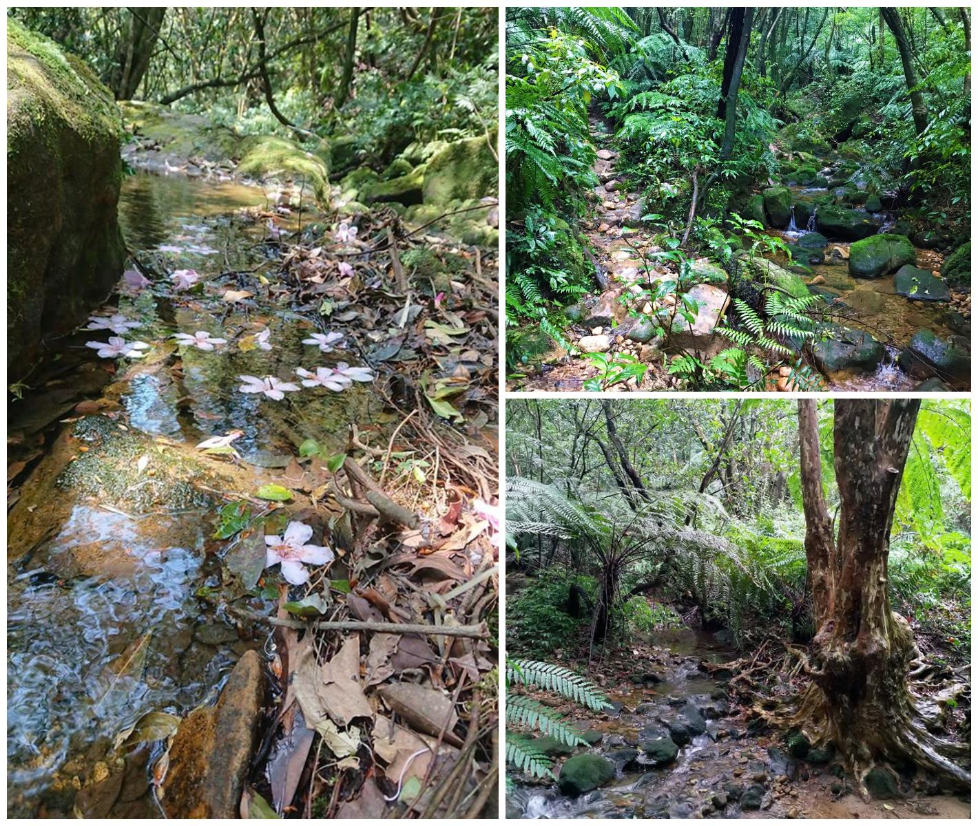 小暑2 無痕山林 手做步道之旅