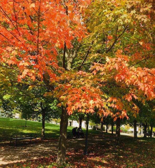 秋意正濃,聽友黃宇大哥捎來多倫多的楓紅,心都飛出去了