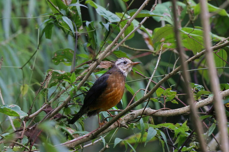 野鳥沒有國界,政治影響保育?中華鳥會被國際鳥盟除名始末