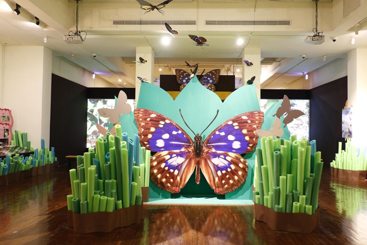「蝴蝶與福蝶特展」臺博館邀你探索藝術與科學