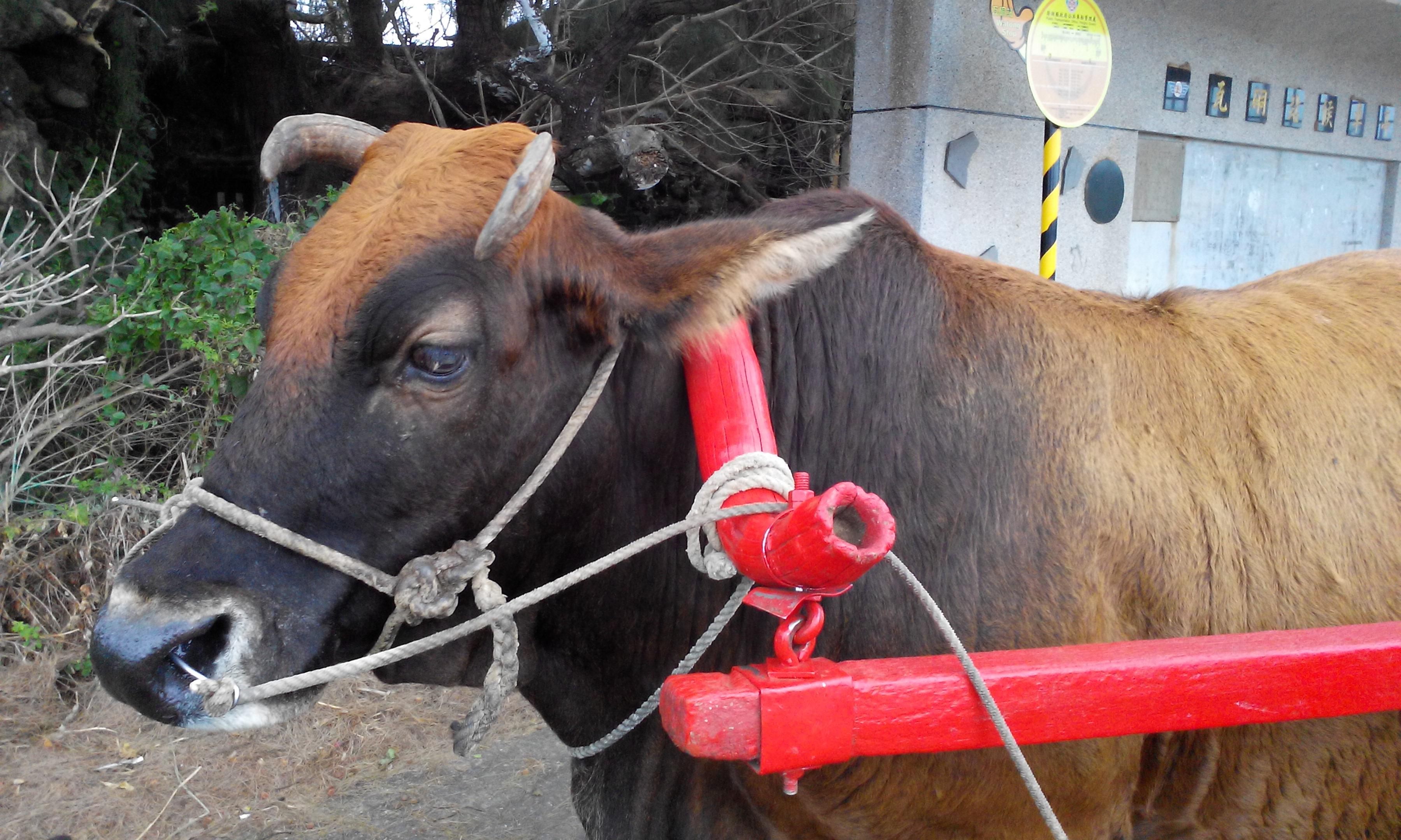 中國歷史上的牛典故