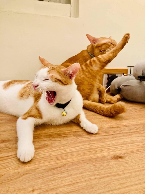 貓之家俱樂部  帶著貓咪去旅行