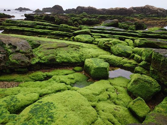 高科技藻生活3.0版