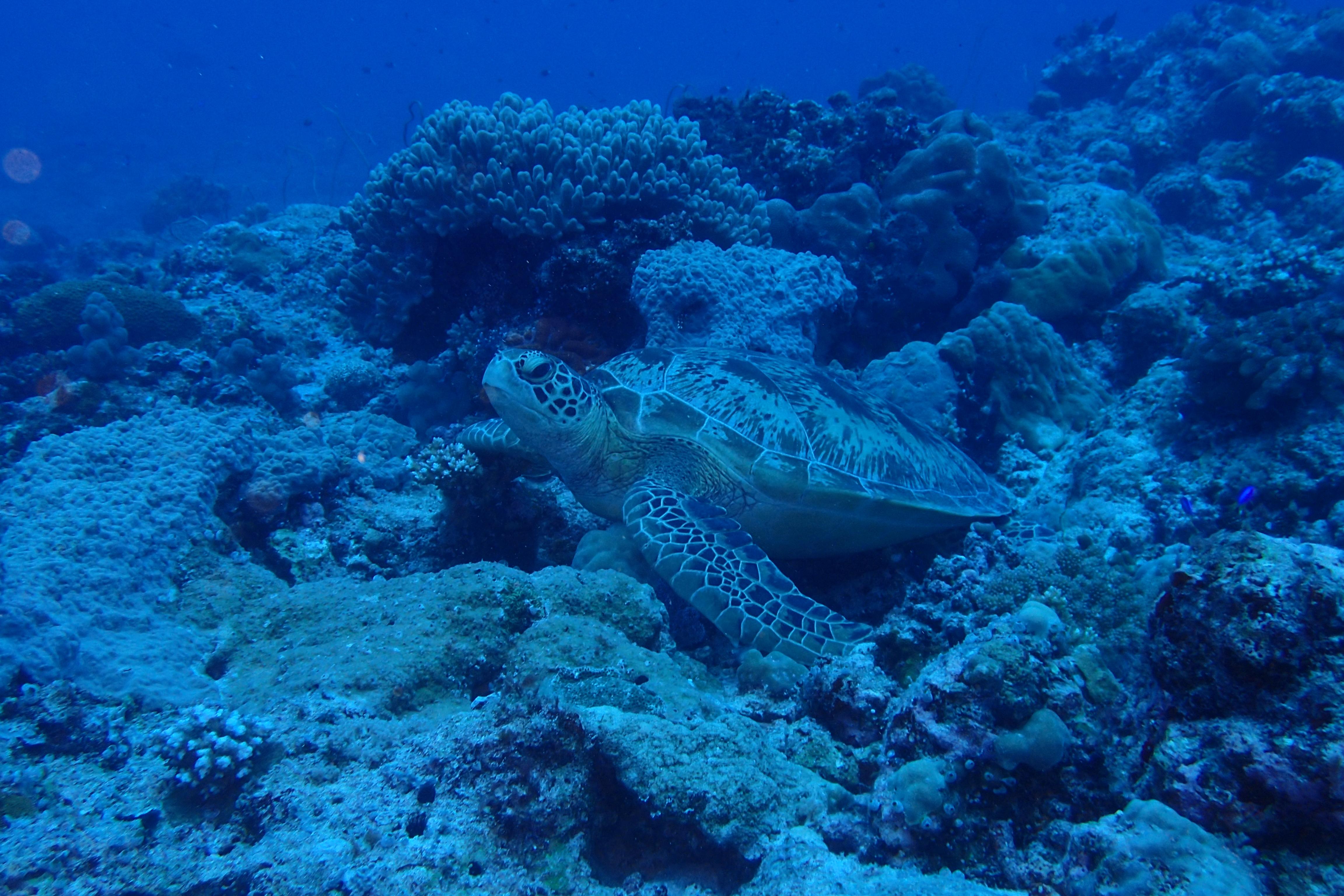 全世界只有七種海龜