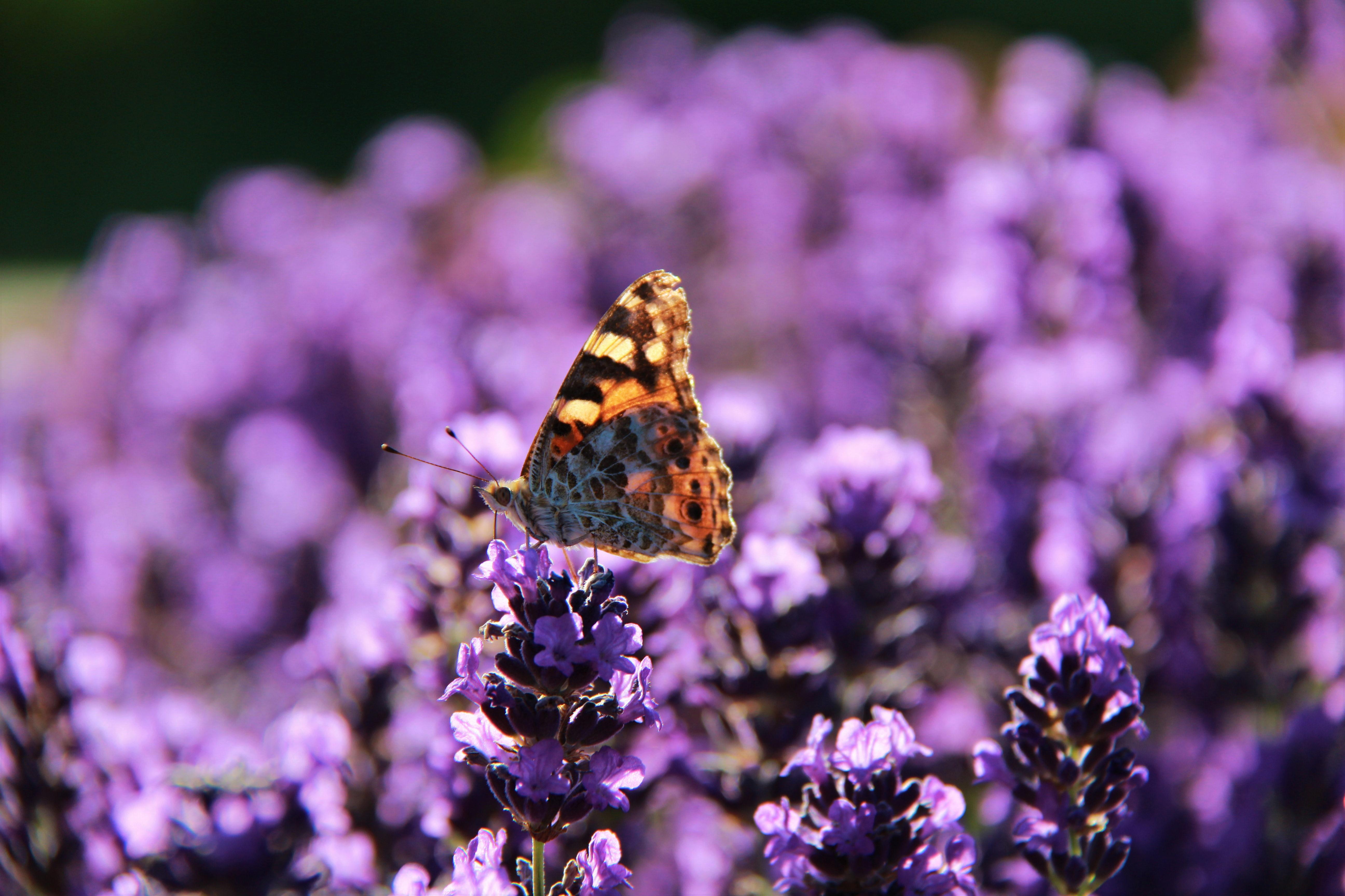 紫色浪漫五月天