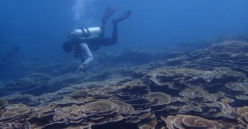 臺灣珊瑚礁體檢