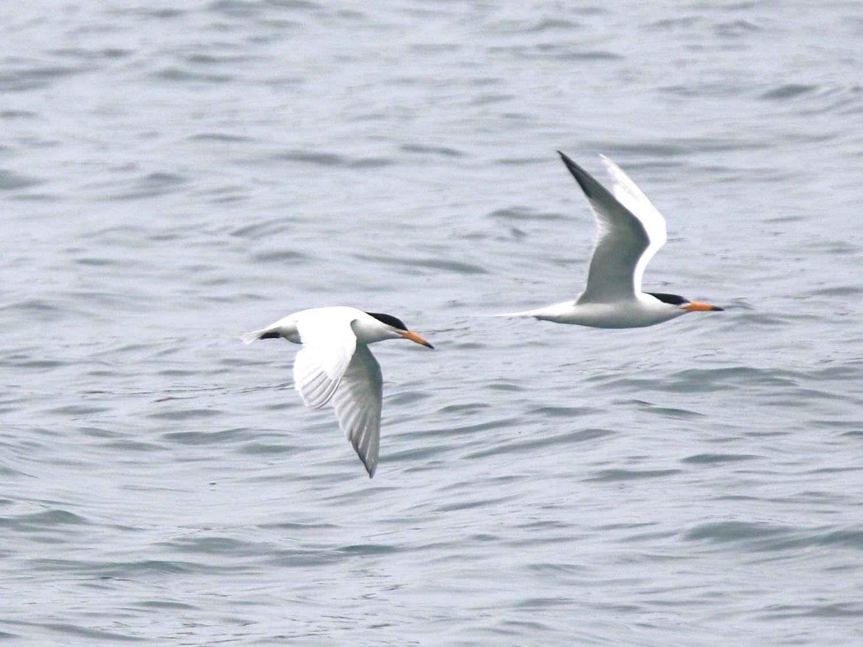 海上飛羽─海鳥