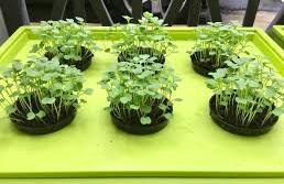 天空農地計劃,開心農園就在你家!