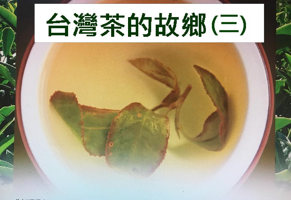 台灣茶的故鄉(三)