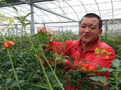 金盆洗手從農 高世男種出免洗番茄