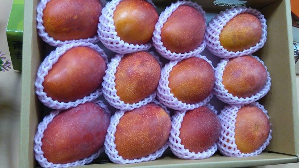 陸扣檢台灣芒果 貿易商:不進口了