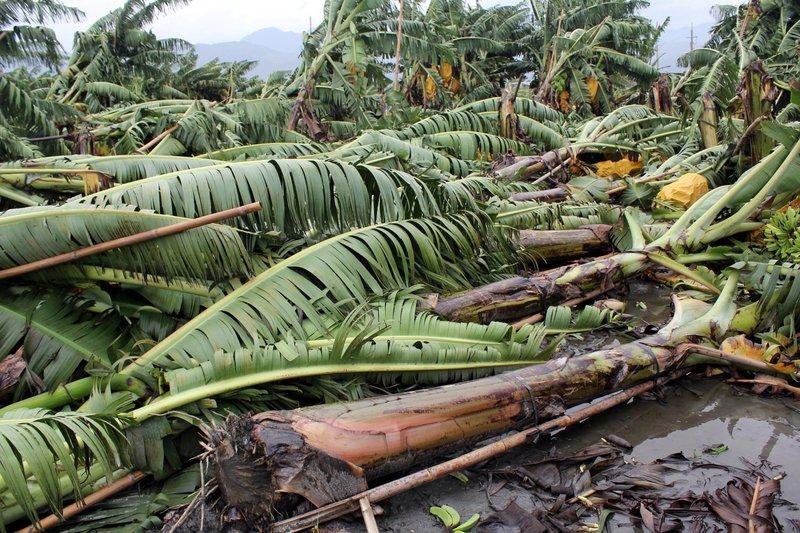 颱風農損 農委會統計已逼近5億