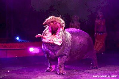 巴黎承諾禁馬戲團利用野生動物