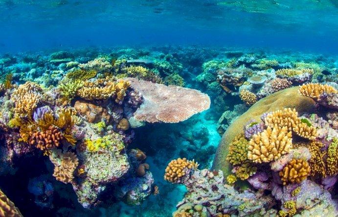 澳洲遊說成功 大堡礁暫不列入世界遺產瀕危名單