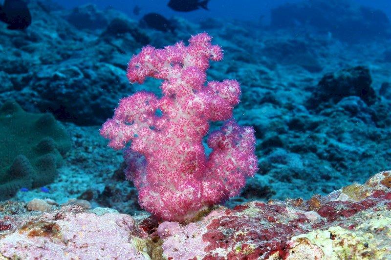 全球首本八放珊瑚圖鑑 列東沙環礁近120種