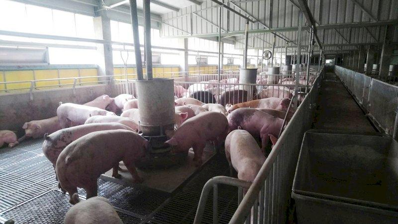 新疆學生抗議被迫吃豬肉 被關進肉品冷藏庫