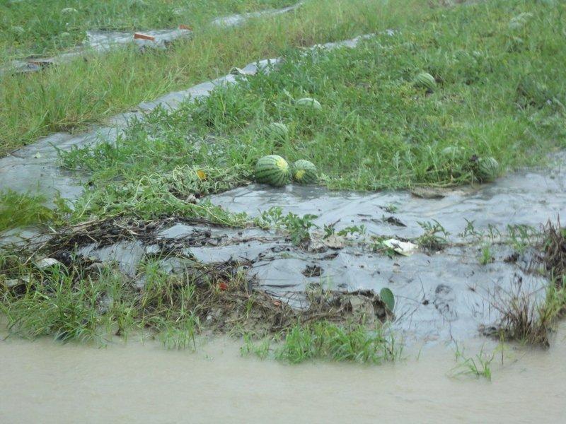 農損累計逾4.2億元 農委會:嘉義縣最嚴重