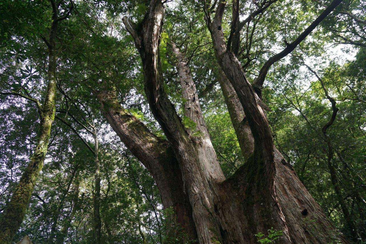李根政出書 為台灣森林轉型正義發聲