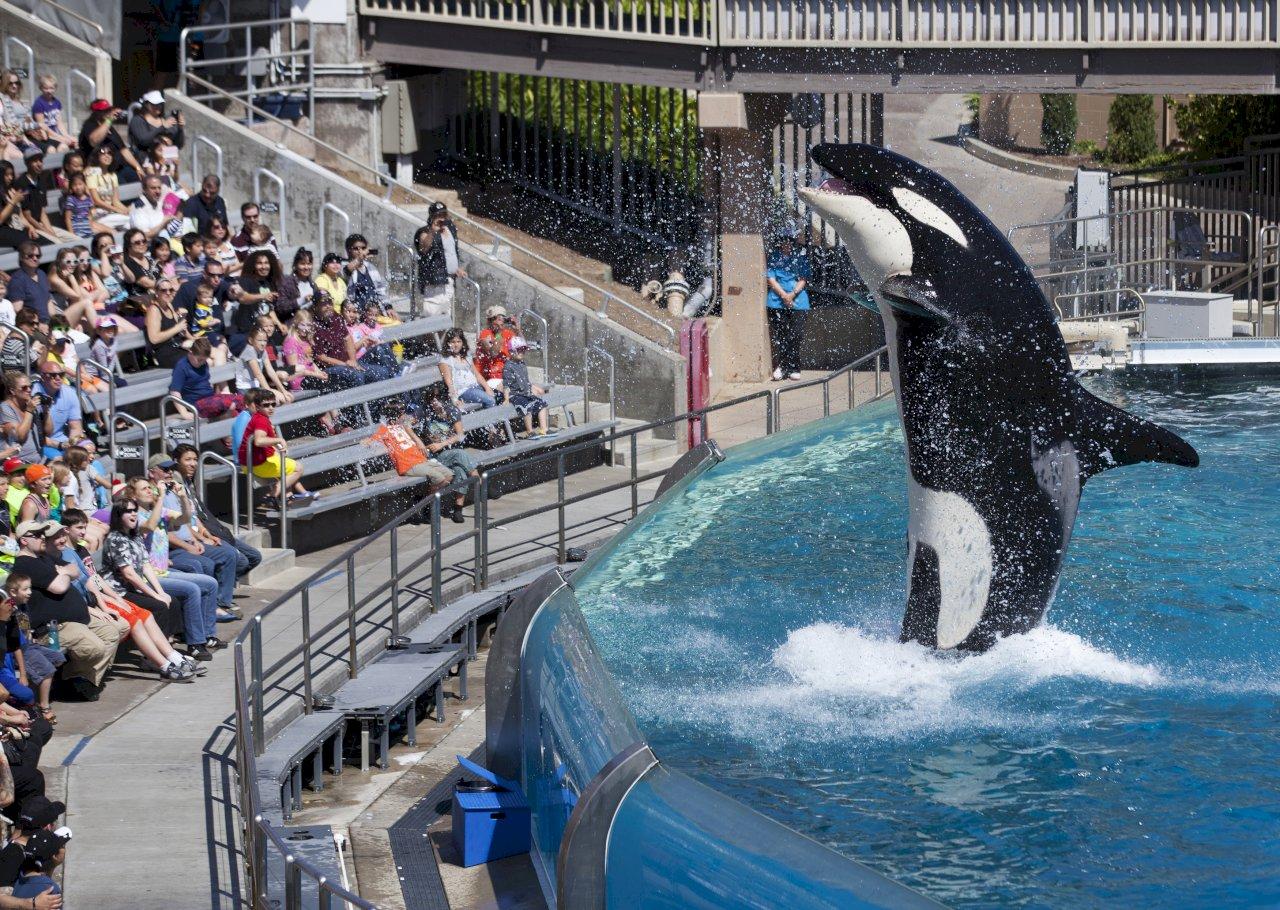 別再騎海豚 動保團體痛批海洋世界