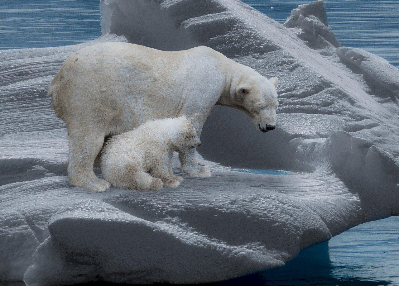 北極海冰縮減 加劇致命動物病毒擴散