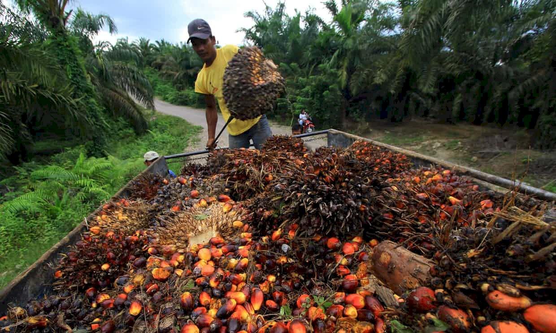 血汗棕櫚油涉奴工 美議員籲相關產品禁止進口