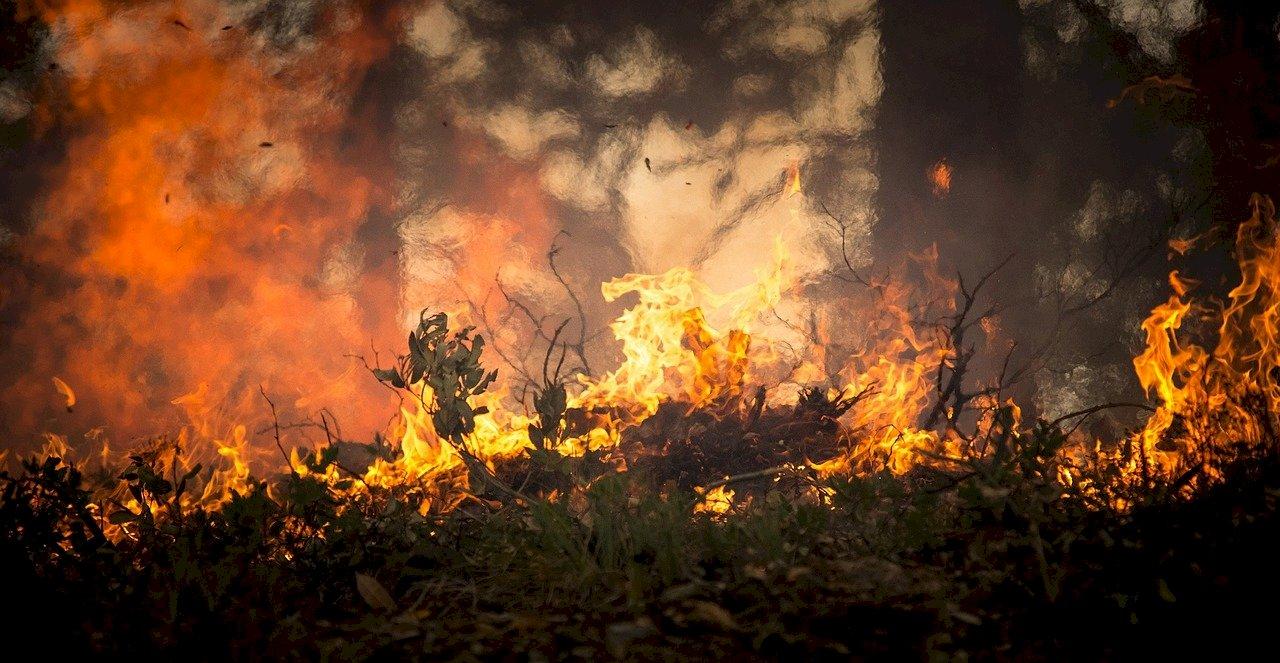 韓國山區多處野火 約255公頃森林燒毀