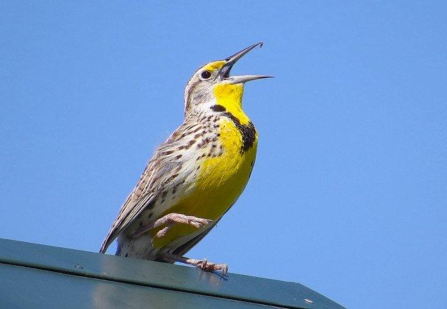 全球生態危機 研究:北美洲鳥類50年少近30億隻