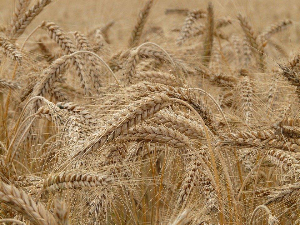 中國上半年採購美農產品 僅達協議目標20%