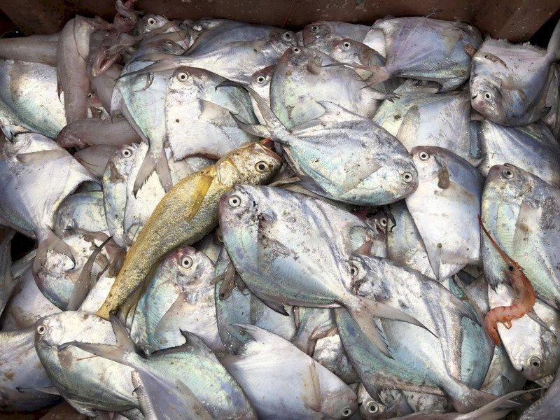 年節水產白蝦價一飛沖天 白鯧不再高不可攀(影音)