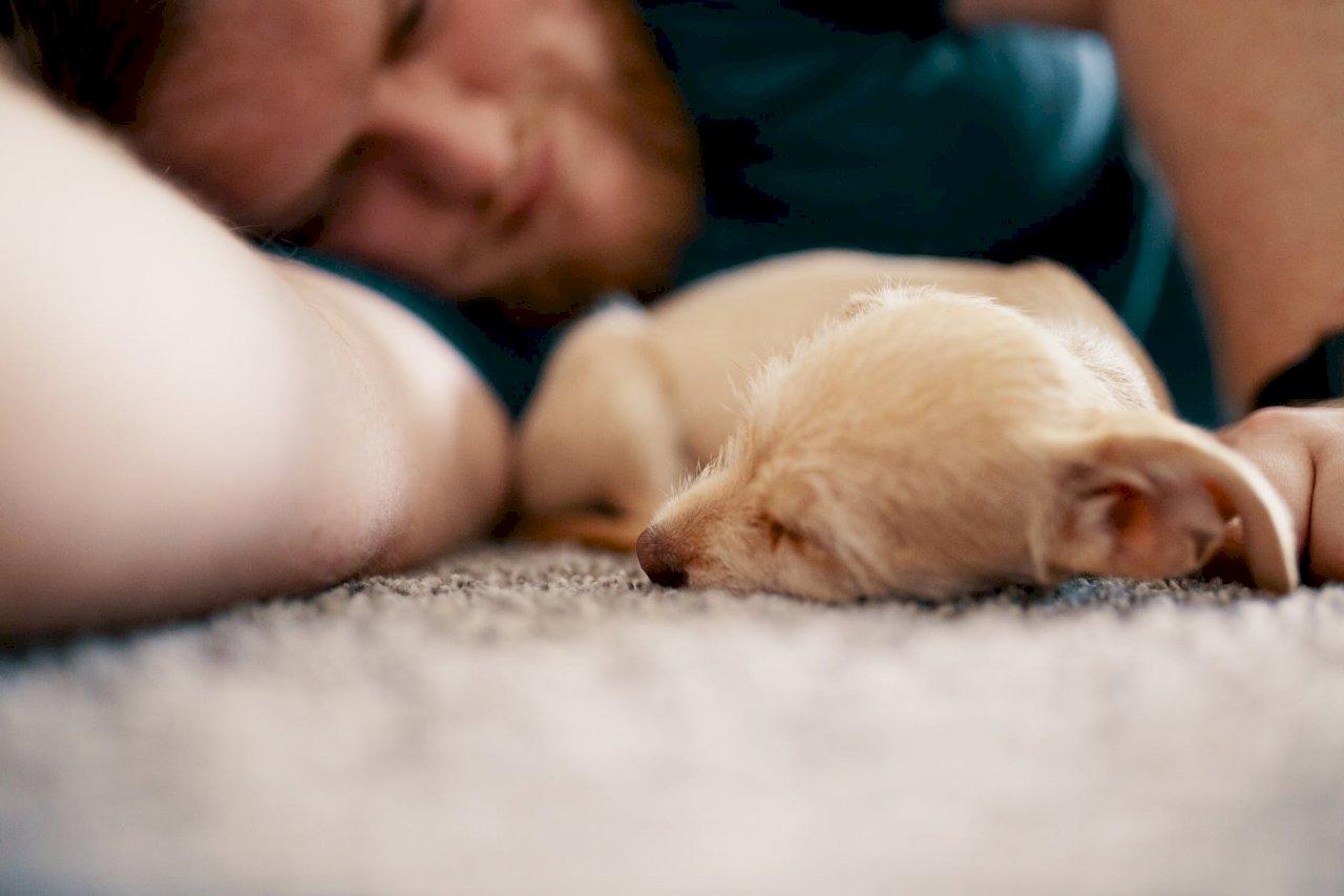 降低心血管疾病死亡風險 養狗可延長壽命