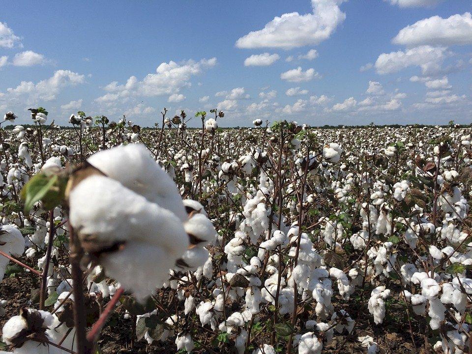 全面禁新疆棉花 美服飾團體:難以執行