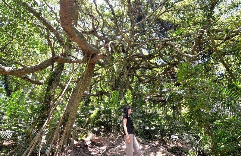 「木」以載生,與「木」共生的關係學