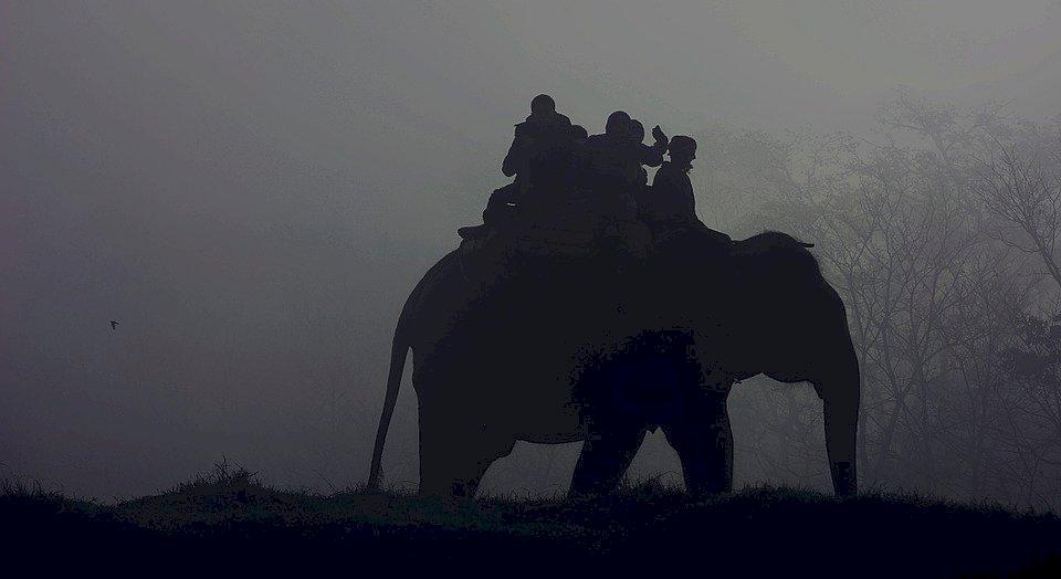 不再逼動物賺錢 吳哥窟園區2020年起禁止騎象