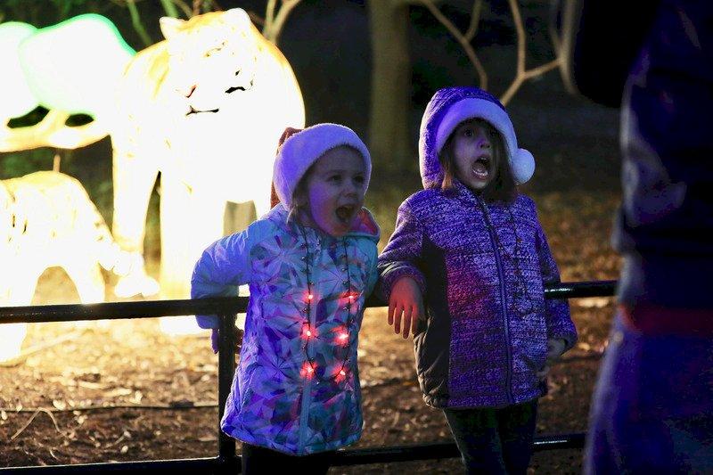 華府動物園燈光秀開幕 濃厚節慶味吸引大批民眾