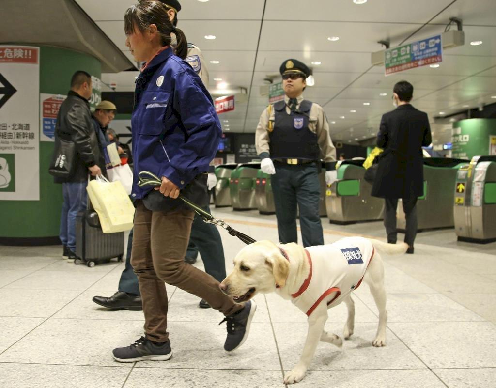 2020東奧安全第一 偵查犬加入東京反恐演習
