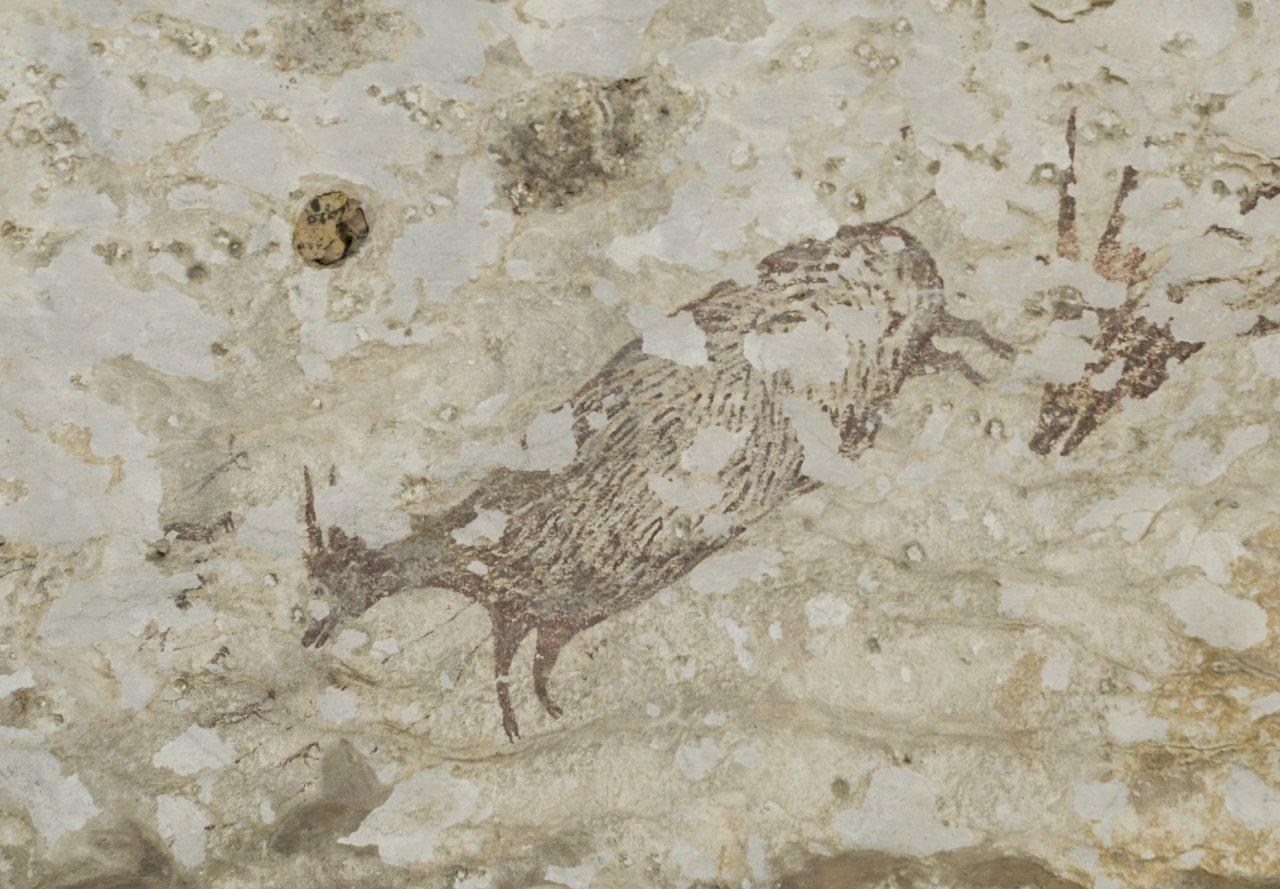 4.4萬年前印尼洞穴壁畫 世上最古老具象藝術品