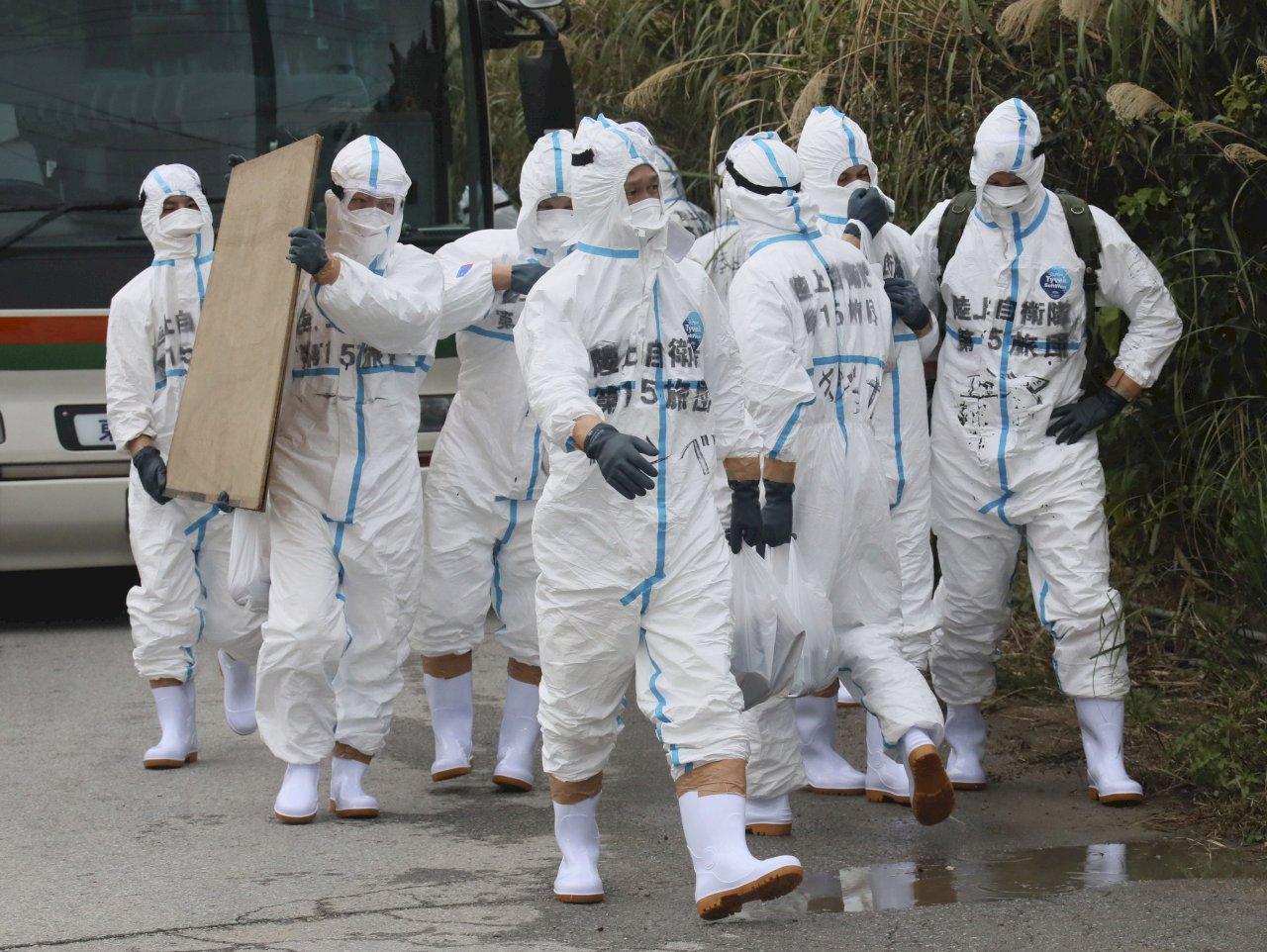 沖繩豬瘟疫情蔓延 將再撲殺2809豬隻