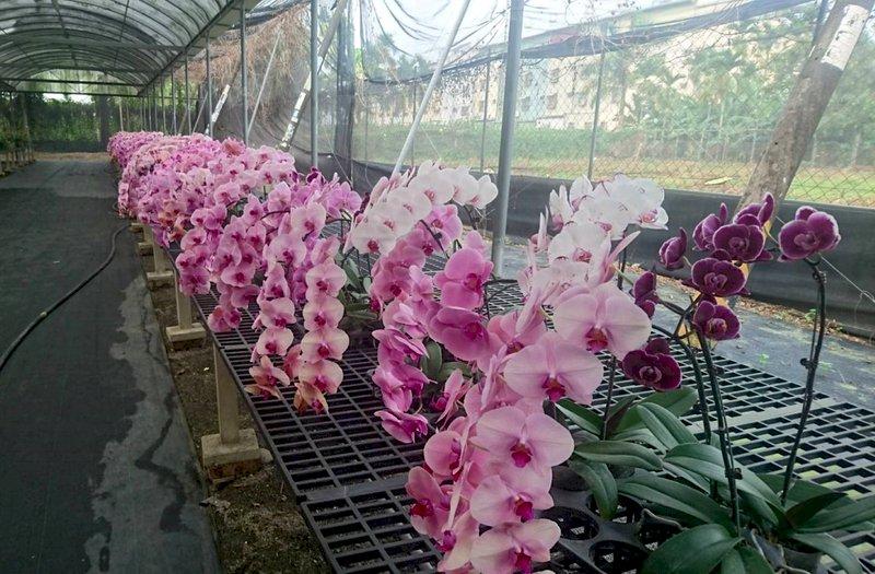 解花卉寒冬 農委會包艙華航5月6日首航日本