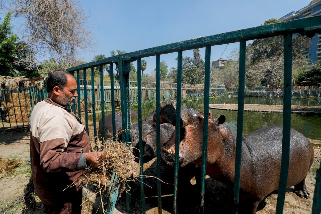 開羅動物園因疫情關閉 動物及飼養員共享安寧