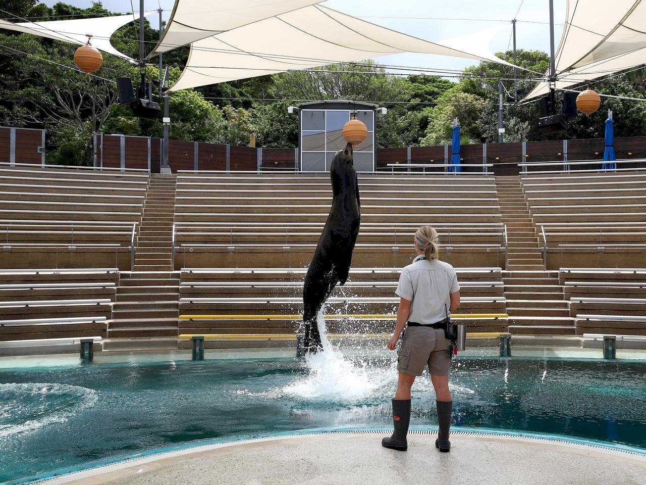 澳洲動物園空蕩蕩 表演訓練仍照舊