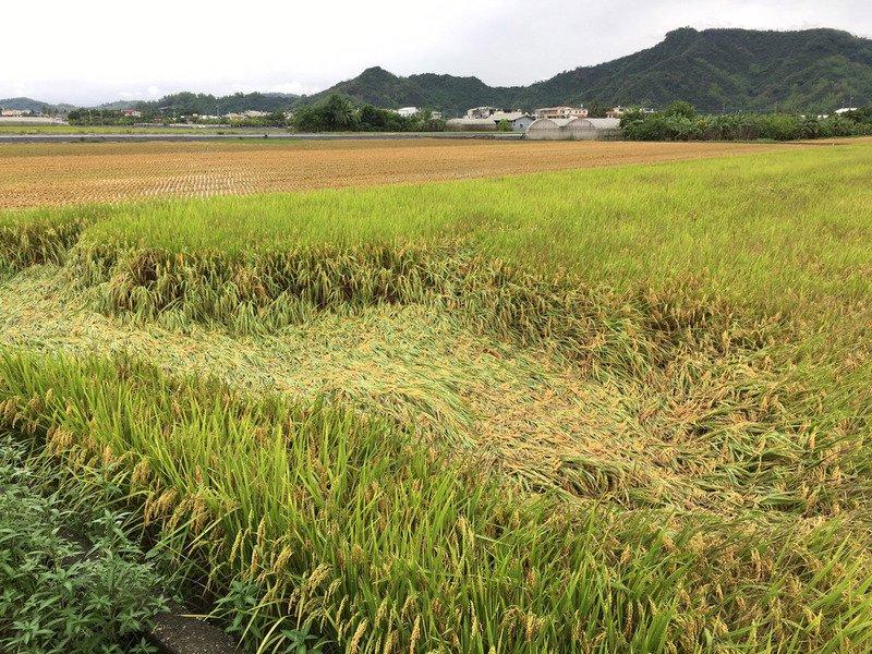 強降雨若釀農損 蘇揆:請農委會即時補助