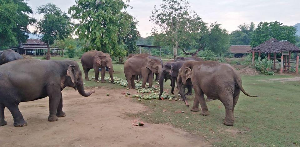 疫情衝擊泰國觀光 大象庇護所苦撐度難關