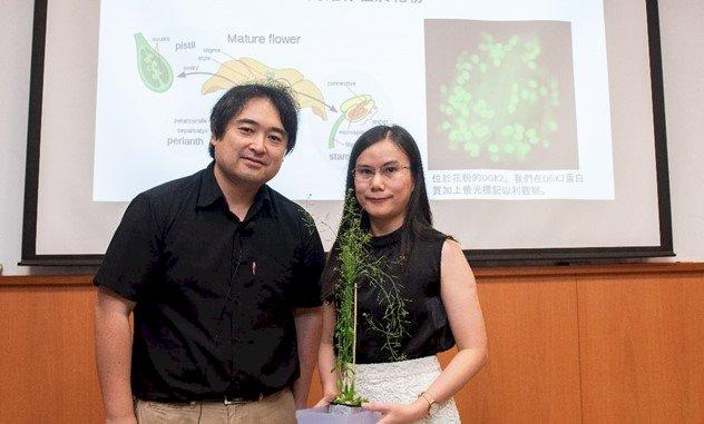 中研院發現植物受孕關鍵 盼解決農產減量問題