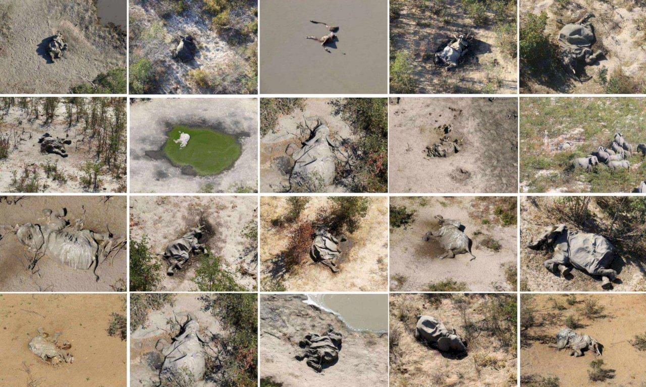波札那數百隻大象暴斃 凶手疑為自然環境毒素