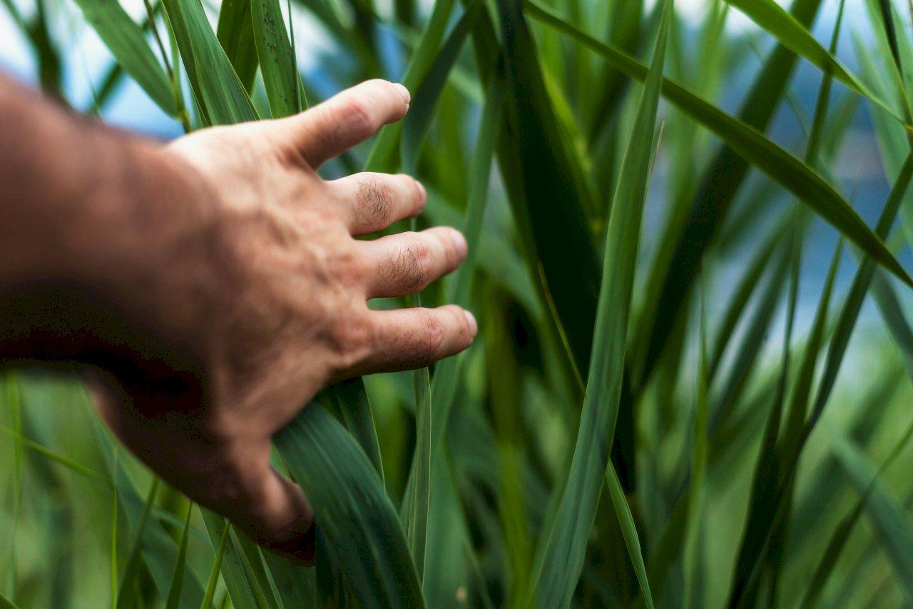 寇延丁:從「有中國特色的Metoo」扯一扯『中國特色』(五)自己田裡的草只能自己拔
