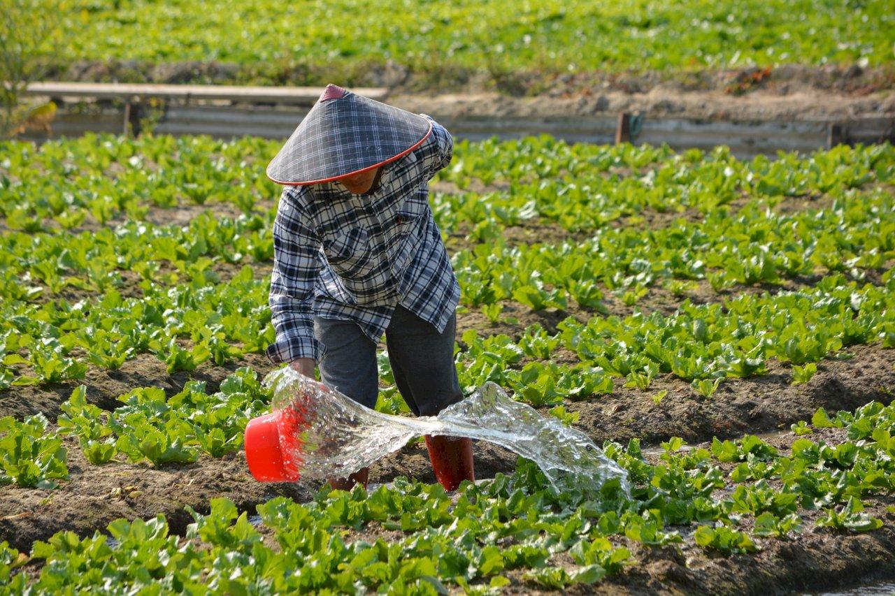 農民中暑、熱痙攣或熱衰竭 勞保局提醒農民職災保險可給付