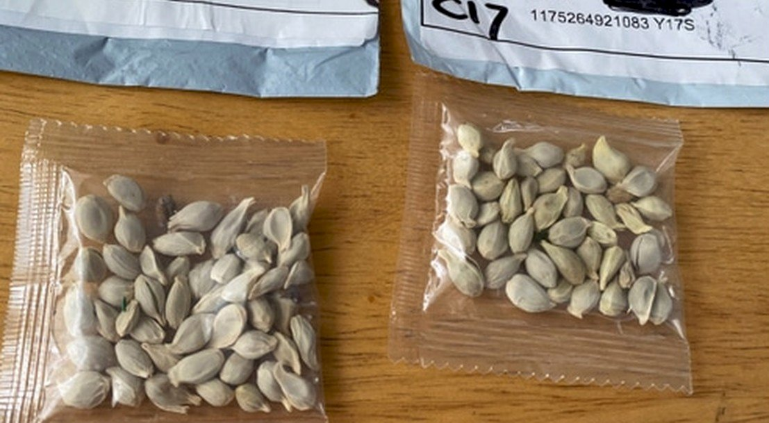 中國神祕種子入侵 法國農業部積極展開調查