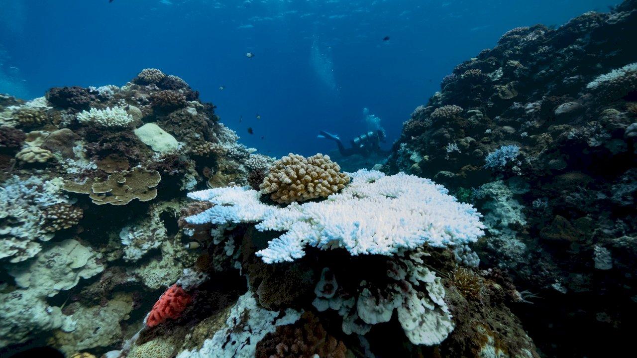 台灣珊瑚白化危機再加劇  綠色和平促積極減排(影音)