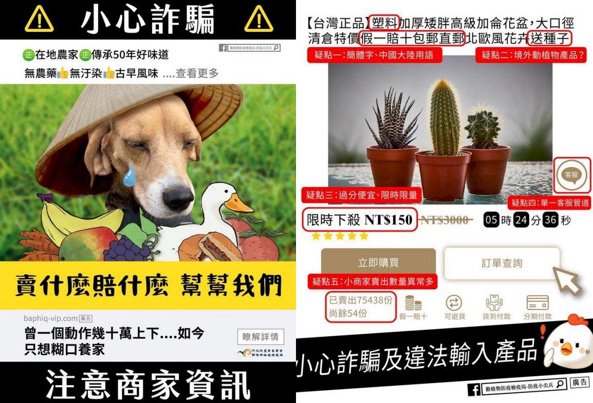 網購國產肉鬆餅卻來自中國 農委會籲5大疑點揪破綻防非洲豬瘟